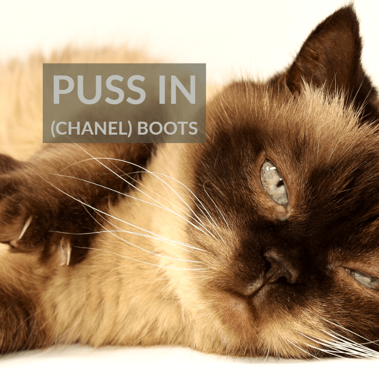 puss in boots - Puss in (Chanel) Boots